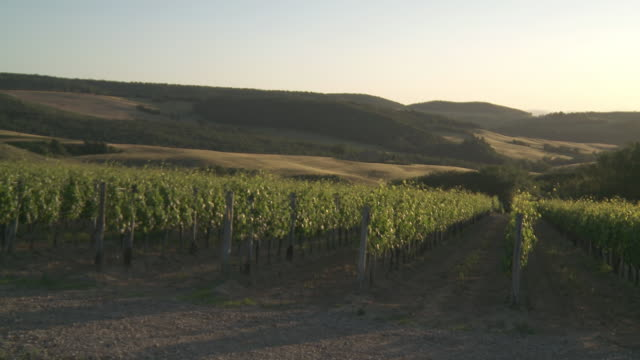 ws view of vineyard at sunset / montepulciano, tuscany, italie - toskana stock-videos und b-roll-filmmaterial