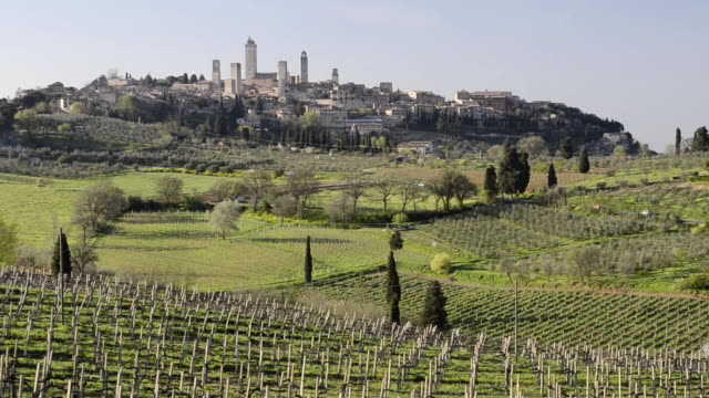 WS View of Vineyard in front of medieval Village / San Gimignano, Tuscany, Italy