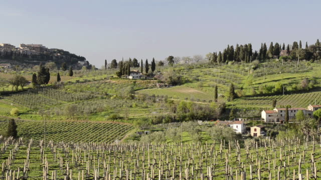 WS PAN View of Vineyard in front of medieval Village / San Gimignano, Tuscany, Italy