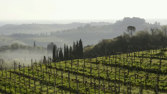 ws view of vineyard in tuscany hills in morning / san gimignano, tuscany, italy - siena italy stock videos and b-roll footage