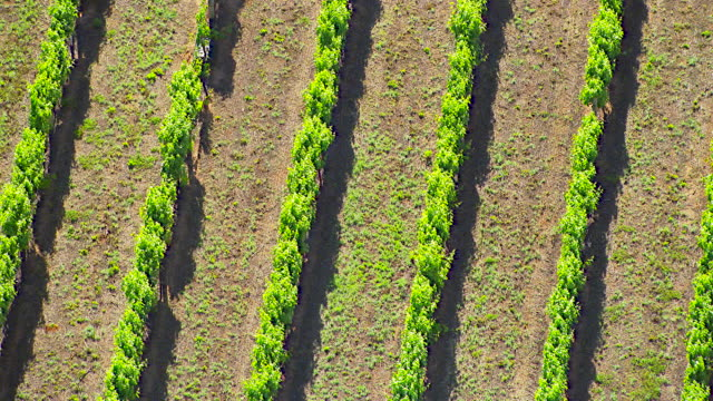 vidéos et rushes de ws aerial zi view of vineyard / new south wales, australia - 1 minute et plus