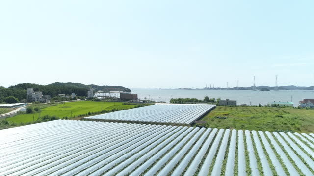 view of vineyard polytunnels / yeongheungdo island, incheon, south korea - orchard stock videos & royalty-free footage