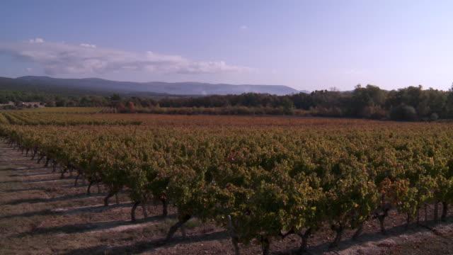 vídeos de stock e filmes b-roll de ws pan view of vineyard  / roussillon, provence, france - luberon
