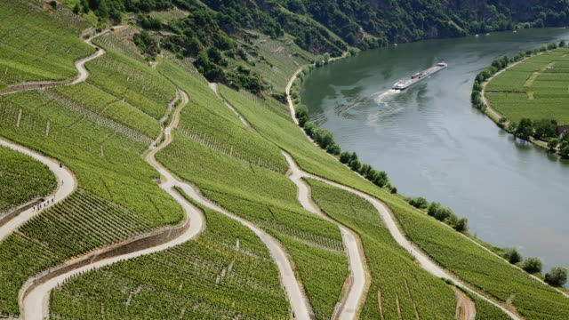 WS HA View of vineyards at Moselle Valley and cargo ship passing / Rhineland Palatinate, Germany