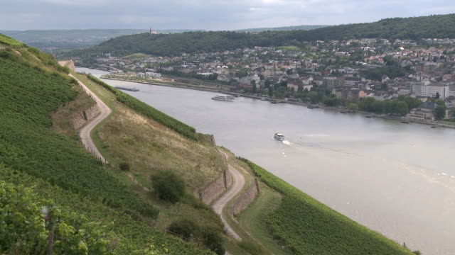 WS View of vineyards near Rüdesheim / Rhine-Valley,  Hesse, Germany