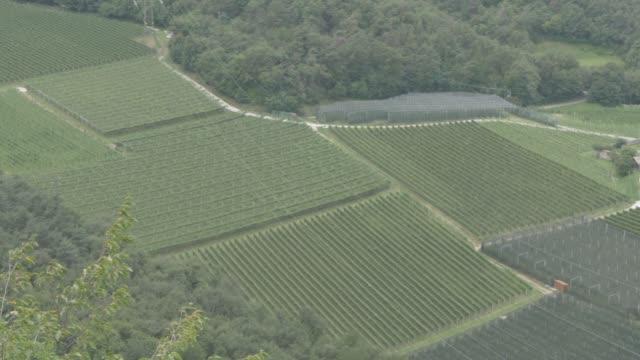 view of vineyards near valda, province of trento, south tyrol, italian dolomites, italy, europe - トレンティーノ点の映像素材/bロール