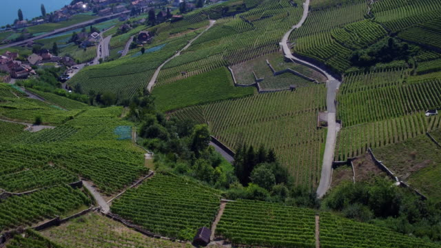 view of vineyards of lavaux, unesco - lake geneva stock videos & royalty-free footage