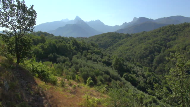 WS AERIAL View of vinyards and olive trees in Alpi Apuane mountains / Alpi Apuane, Tuscany, Italy