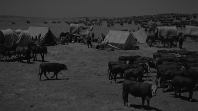 ws view of wagon train camp, cattle, covered wagons and people  - 西方拡大点の映像素材/bロール