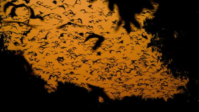 view of warm of bats moving at sunset in mulu, island of borneo - pipistrello video stock e b–roll