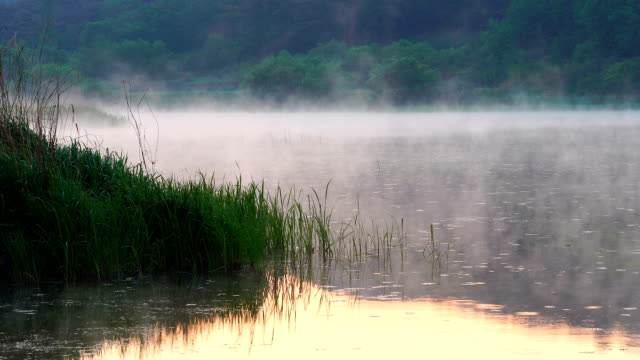View of wet fog over Uponeup pond (One of the largest natural swamps in Korea)