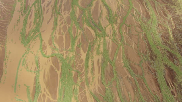 WS AERIAL VERTICAL View of wetland landscape with trees / Kenya