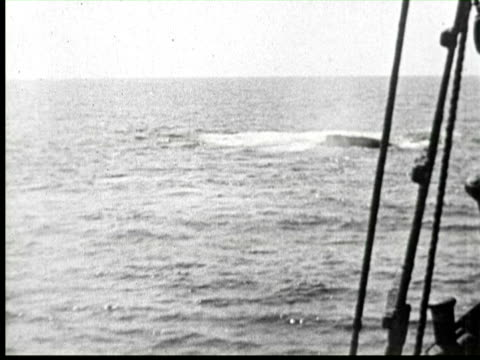 b/w pov view of whales in sea water, united states / audio - whaling stock videos & royalty-free footage