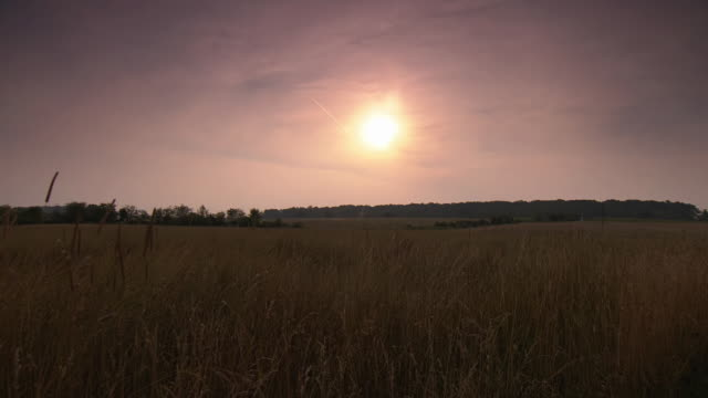 ws pan view of wheat field at gettysburg national military park at dusk / gettysburg, virginia, united states - gettysburg stock videos & royalty-free footage