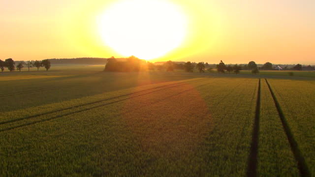 ms aerial view of wheat fields at sunrise / ehingen, bavaria, germany - sun stock videos & royalty-free footage