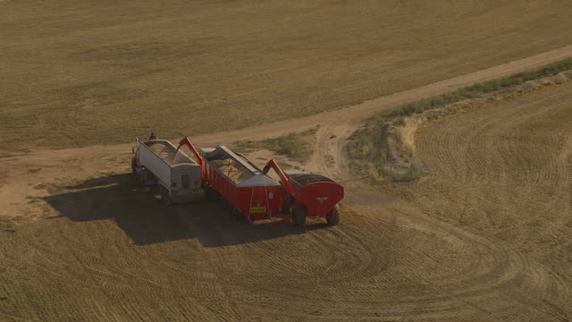 WS AERIAL View of Wheat loading in truck / Colligen Creek Deniliqiun, New South Wales, Australia