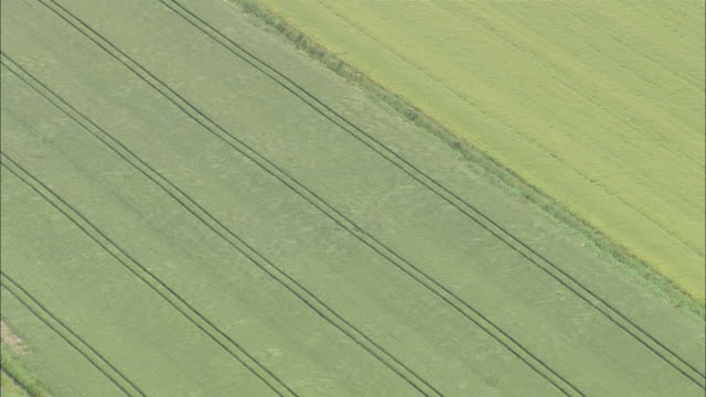 AERIAL MS ZI view of wind flowing on wheat field / Emden, Lower Saxony, Germany