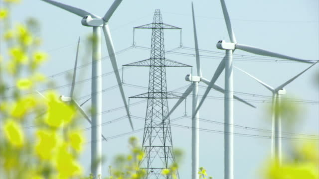 ws zo view of wind turbines and electricity pylons through rape seed crop / walland marsh, sussex, uk - power line stock videos and b-roll footage