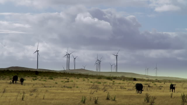 ws view of wind turbines rotating as clouds rush overhead and cattle / melbourne, victoria, australia - nutztier oder haustier stock-videos und b-roll-filmmaterial