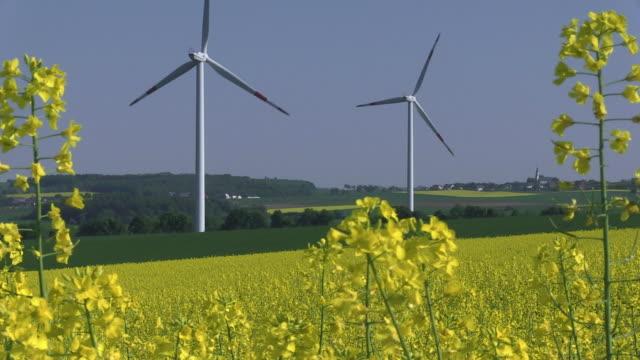 ws view of windmills in rape field / kirf, rhineland-palatinate , germany - crucifers stock videos & royalty-free footage