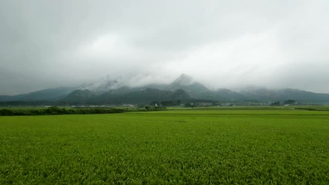 view of wolchulsan mountain and field in yeongamgun, jeollanam-do, south korea - 水田点の映像素材/bロール
