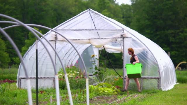 vídeos y material grabado en eventos de stock de ws slo mo ts view of woman carries tub past green/hoop house at organic farm / chatham, michigan, united states - sólo mujeres jóvenes