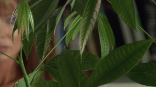 CU PAN R/F View of woman through plant leaves / Jacksonville, Florida, USA