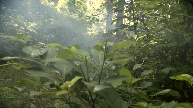 ws pov view of woman walking through forest carrying basket / middleburg, virginia, united states - 青々とした点の映像素材/bロール