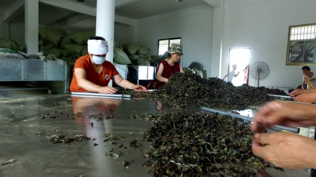 view of women processing tea leaves./fujian,china. - dried tea leaves stock videos & royalty-free footage