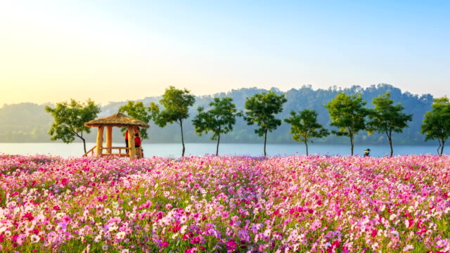 View of Wondumak(Lookout hut) and cosmos flower bed at the Hangang park