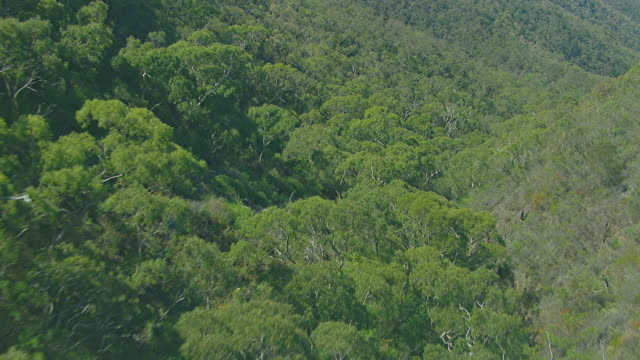 MS AERIAL View of wooded area through mountain range / Adelaide, South Australia, Australia