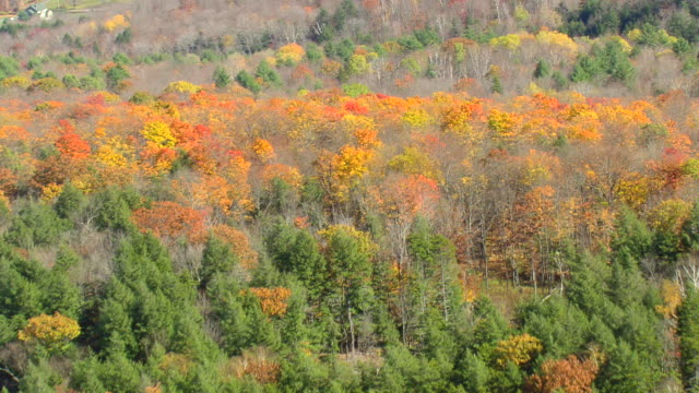 MS AERIAL View of wooded area with autumn color / Vermont, United States