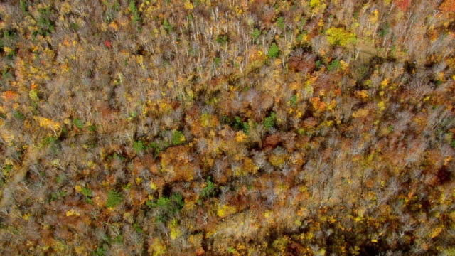 WS ARIEAL View of Wooded area with autumn color  / Vermont, United States
