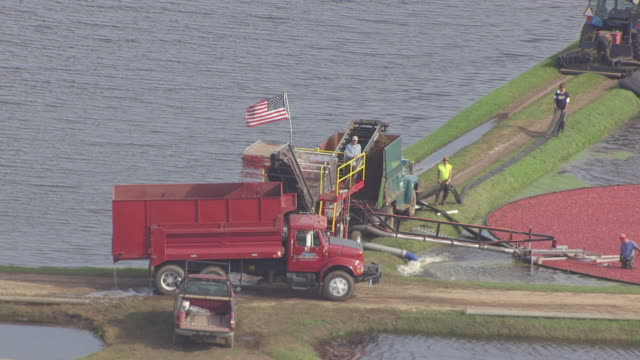 ms aerial view of workers harvesting cranberries from flooded marsh bed and us flag waving in the wind / cranmoor, wisconsin, united states  - cranberry stock videos & royalty-free footage