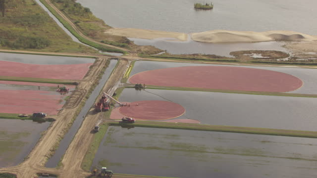 ws aerial view of workers sweeping up pool of corralled cranberries / cranmoor, wisconsin, united states  - cranberry stock videos & royalty-free footage