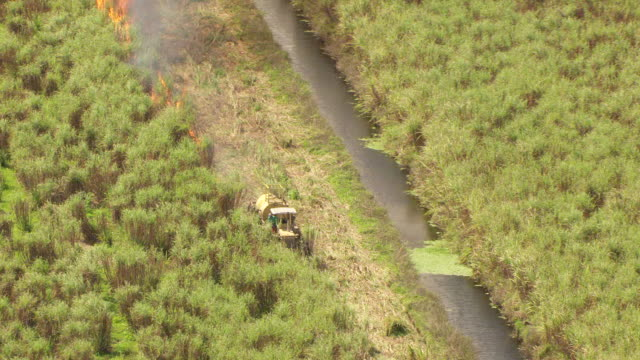MS AERIAL ZI View of yellow tractor igniting flames on sugarcane farm / Lake Okeechobee, Florida, United States