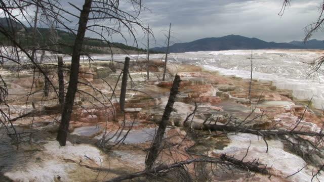 view of yellowstone national park in wyoming united states - kvist bildbanksvideor och videomaterial från bakom kulisserna