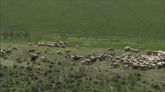 ws aerial view of young bedouin boy herding his sheep / negev, israel - ベドウィン族点の映像素材/bロール