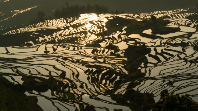 View of Yuanyang Rice Fields