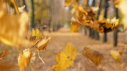 View on empty city park in autumn sunny day. Close up color foliage slowly falling to ground. Alley of park covered yellow leaves. Beautiful autumnal landscape. Slow motion