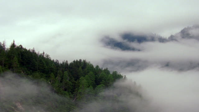 WS AERIAL View over evergreen tree covering mountain range with low hanging clouds