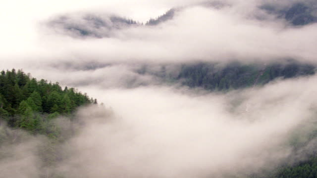 vídeos de stock, filmes e b-roll de ws aerial view over evergreen tree covering mountain range with low hanging clouds - 1 minuto ou mais