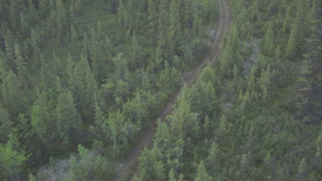 vidéos et rushes de ws aerial ts view over follow stampede trail / alaska, united states - footpath