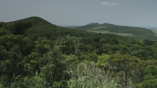 view over forested hillsides. japan. - anhöhe stock-videos und b-roll-filmmaterial