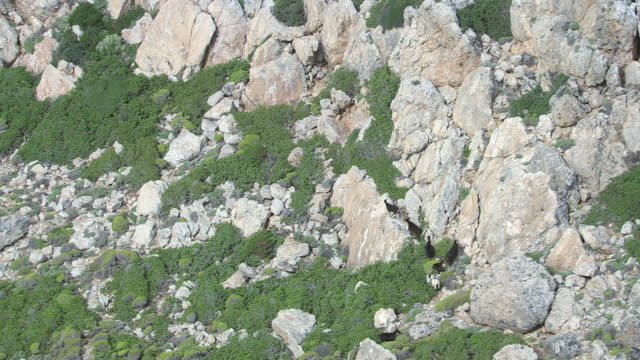WS AERIAL TS View over goats running through rocky landscape / Karpathos, Dodecanese, Greece