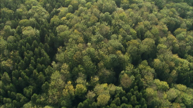 AERIAL WS OH View over green trees in vast forest / Burgundy, France