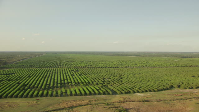 WS AERIAL View over of orchard and farms / Florida, United States