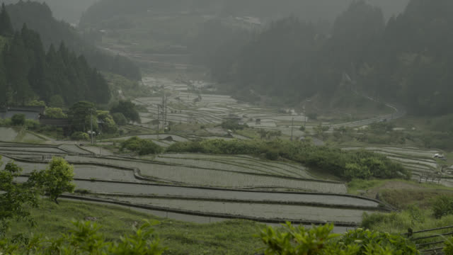 view over paddy fields, japan. - rice stock videos & royalty-free footage