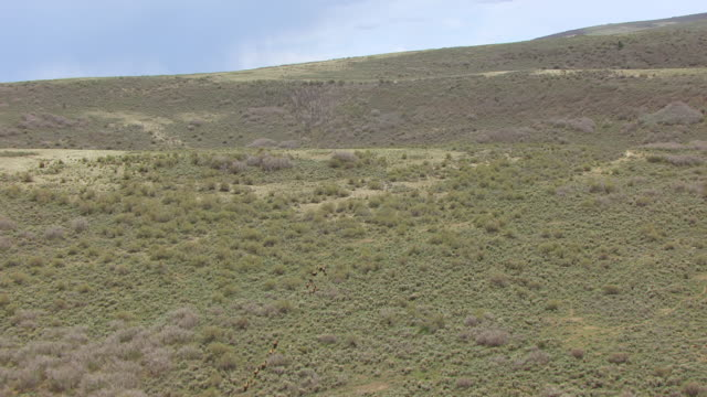 ws aerial ts view over running bison in colorado plateau and bison / utah, united states - colorado plateau stock videos & royalty-free footage