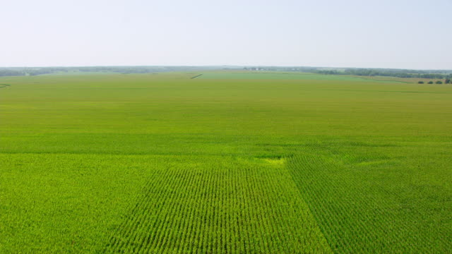 ws tu aerial pov view over soybean fields / jacksonville, illinois, united states - soya bean stock videos & royalty-free footage
